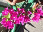 Hírkép: Virágosítási Versenyfelhívás