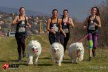 Márciusban kutyás futóverseny lesz Dunaújvárosban