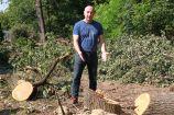 Hírkép: Több, 70 évesnél is idősebb fát vágtak ki illegálisan