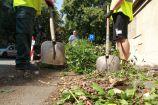 Hírkép: Tisztulnak a város parkolói, legutóbb az Intercisa Múzeum mögötti terület következett