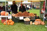 Hírkép: Termelői piacnak ad otthont a Szalki-szigeti kemping