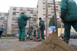 Hírkép: Több helyszínen ültettek fákat