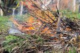 Hírkép: A szabályok betartása mellett ismét lehet avart és kerti hulladékot égetni