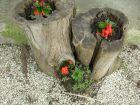 Hírkép: Indul a virágosítási verseny - már lehet nevezni
