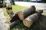 Hírkép: A balesetveszély elhárítása a cél az idős, kiszáradt fák kivágásával